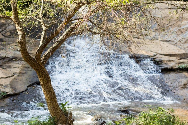Träd nära vattenfallet fotografering för bildbyråer