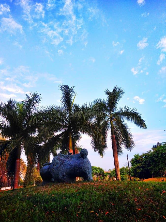 Träd och blå himmel för bakgrunder royaltyfri foto