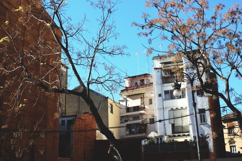 Träd och blå himmel Valencia för byggnader royaltyfria foton