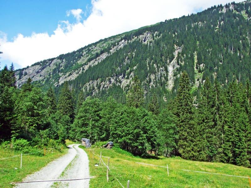 Träd och blandade skogar i Maderanertal den alpina dalen arkivfoto
