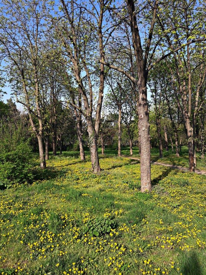 Träd och blommor i parkera, vårtid fotografering för bildbyråer