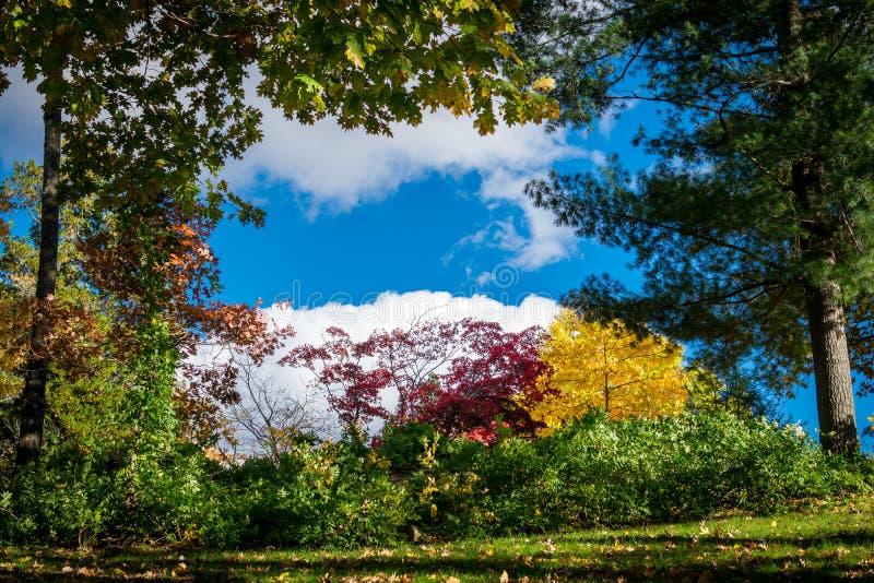 Träd och buskar som visar deras mångfärgade nedgånglövverk, framme av en härlig blå himmel och vita moln på a arkivbilder
