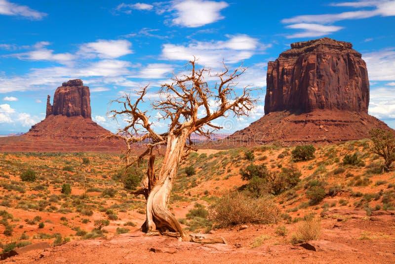Träd och Buttes på monumentdalen arkivfoton