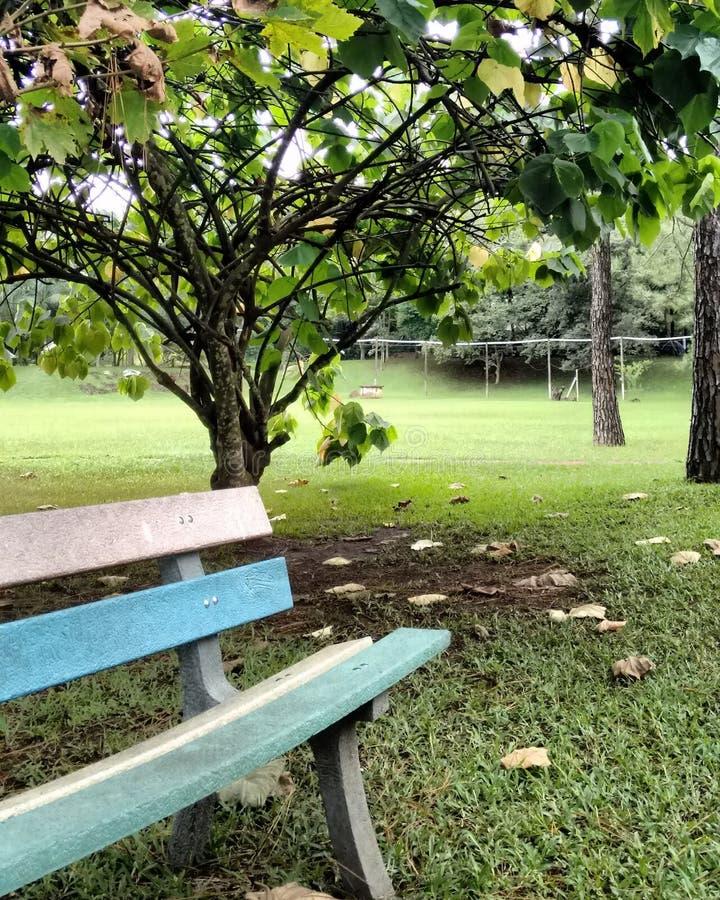 Träd och en bänk i staden royaltyfria bilder