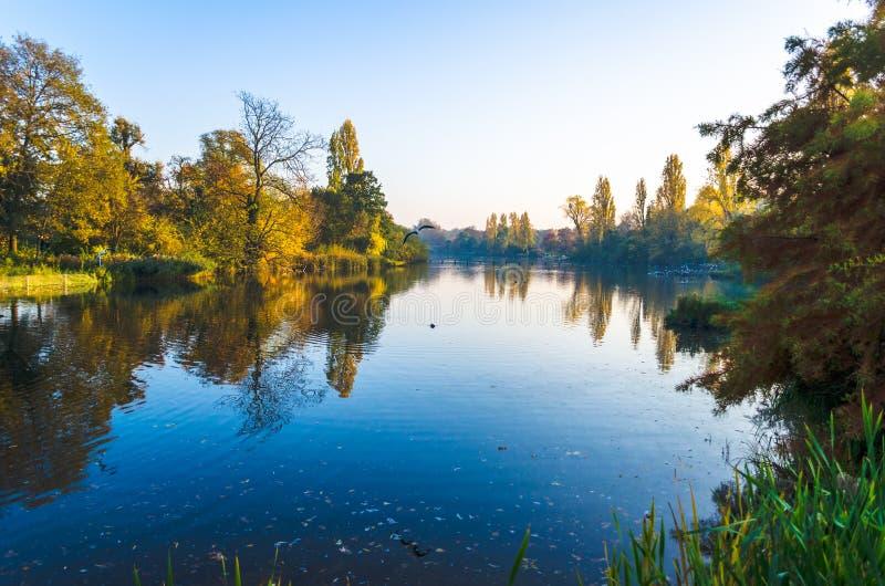 Träd och en sjö i höst på Hyde Park, London arkivbilder