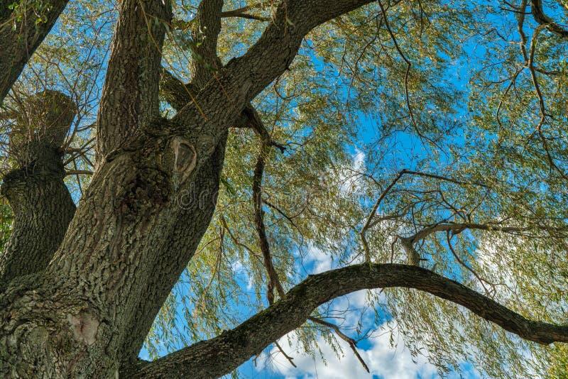 Träd och filialer mot blå himmel arkivbilder
