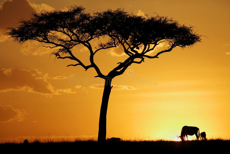 Träd och gnu under solnedgång på masaien Mara arkivbilder