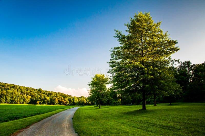 Träd och gräsmatta längs smutsbanan i sydliga York County, PA royaltyfri bild