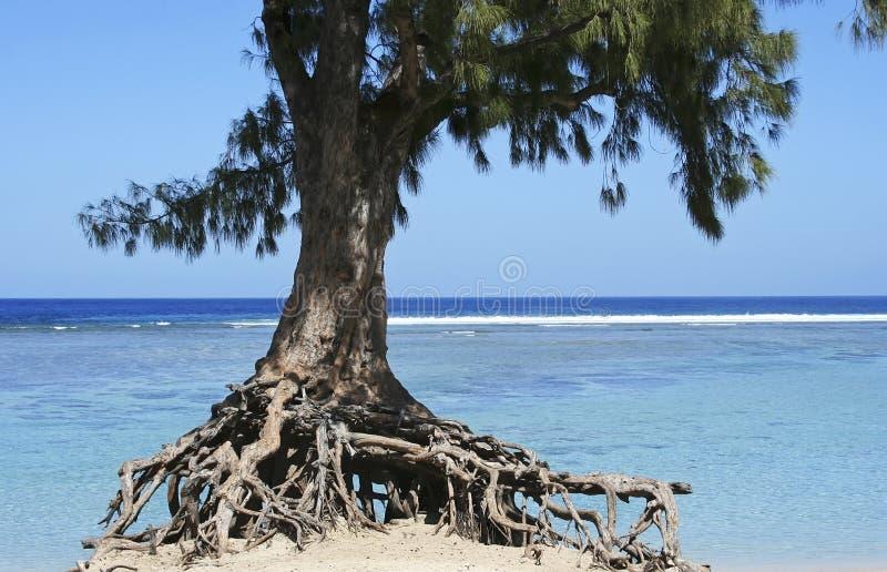 Träd och hav royaltyfri bild