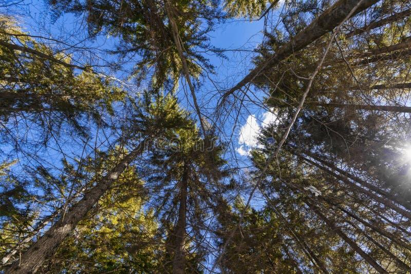 Träd och himmelsikt i skogen royaltyfri fotografi