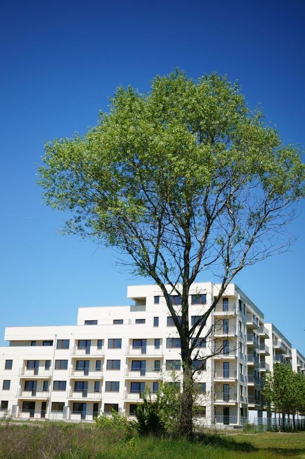 Träd och hyreshus arkivfoto