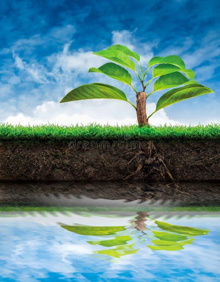 Träd och jord med gräs royaltyfria foton
