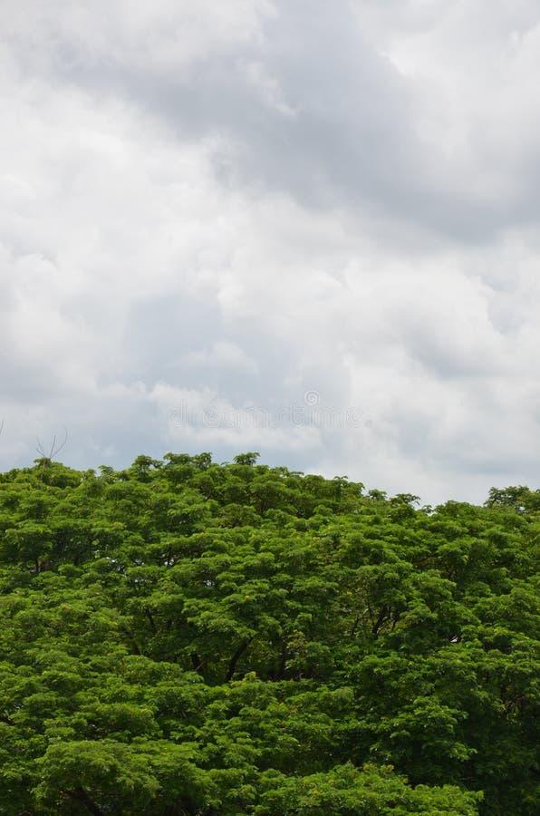 Träd- och molnhimmel arkivfoton