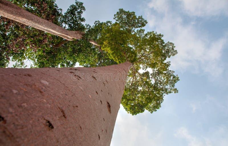 Träd och natur arkivbilder