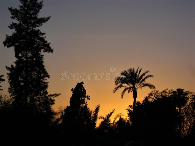 Träd- och Palmtrees kontrast under en guld- solnedgång royaltyfri fotografi