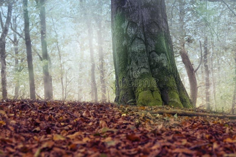 Träd och sidor i skog under nedgång arkivbild