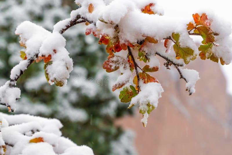 Träd och sidor som täckas i insnöad vinter royaltyfri foto