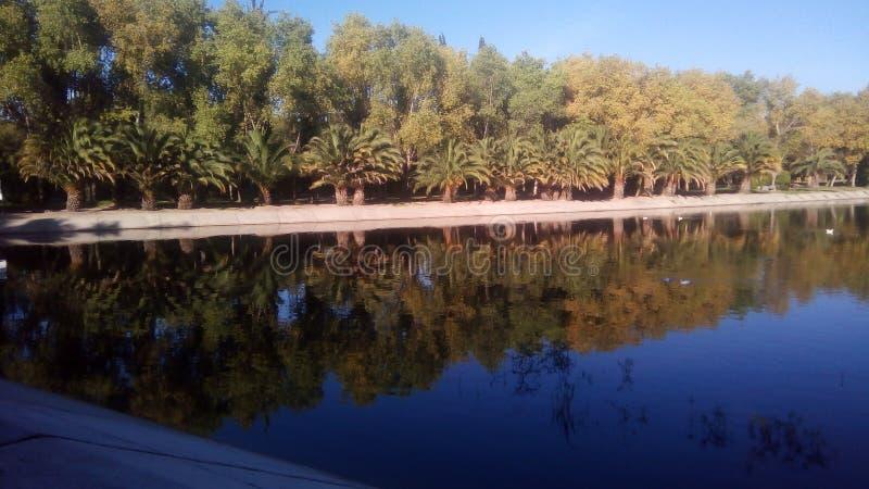 Träd och sjöar arkivbild