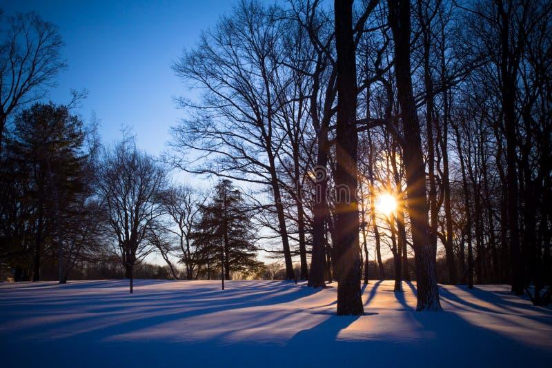Träd och snö för Winterscape nattlandskap royaltyfria bilder
