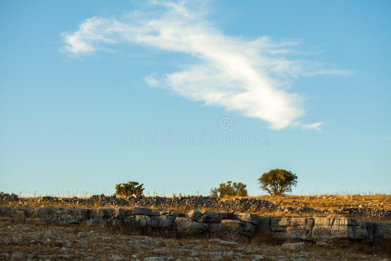 Träd och stenar på solnedgången arkivfoto