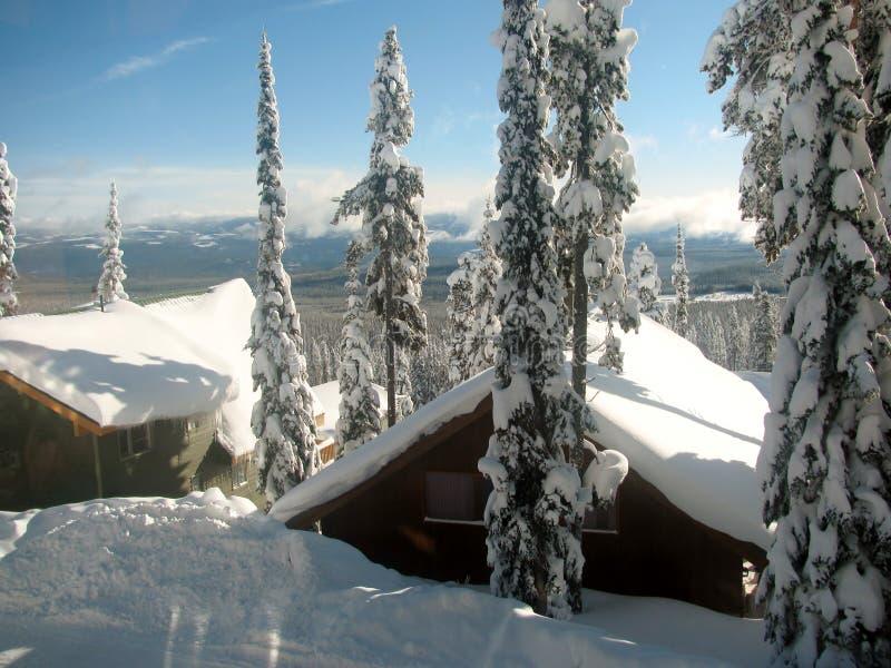 Träd och tak bakade ihop med snö mot en klar blå himmel royaltyfri bild