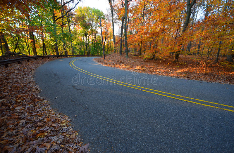 Träd och väg i tidigt gult solljus, i nedgång fotografering för bildbyråer