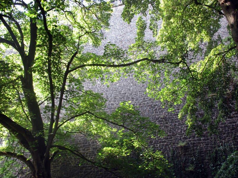 Träd och vägg royaltyfri foto