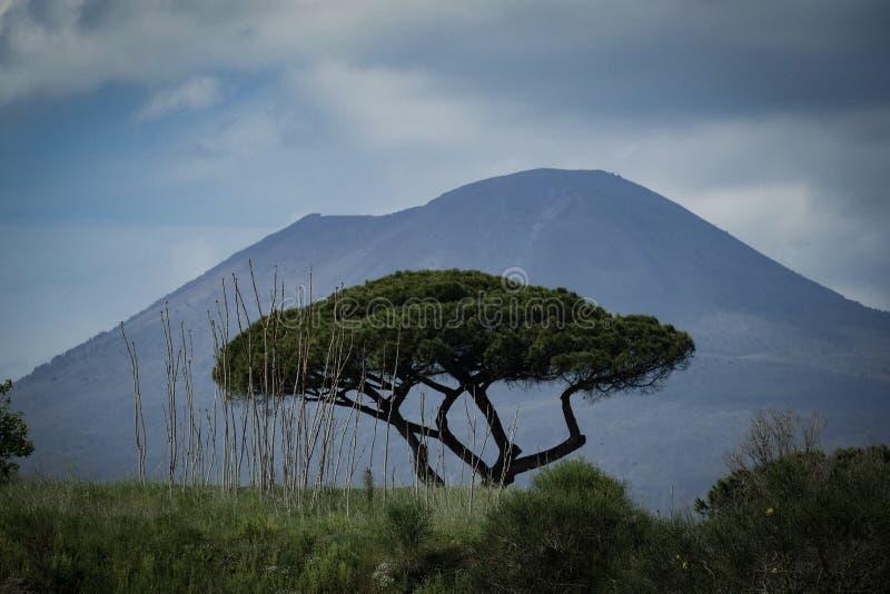 Träd och Vesuvius som är vulcan i bakgrunden arkivbild