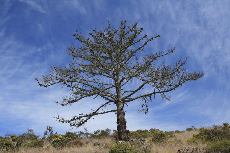 Träd på Angel Island California royaltyfria bilder