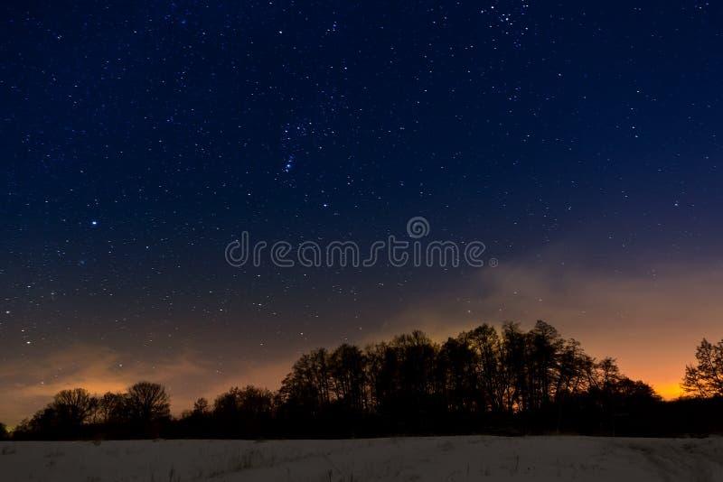Träd på bakgrund av den stjärnklara himlen för natt royaltyfri foto
