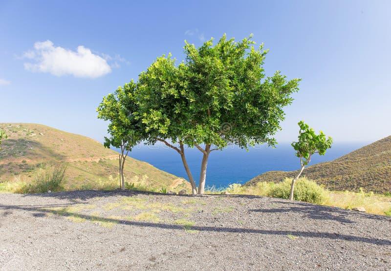 Träd på bakgrunden av havet royaltyfri foto