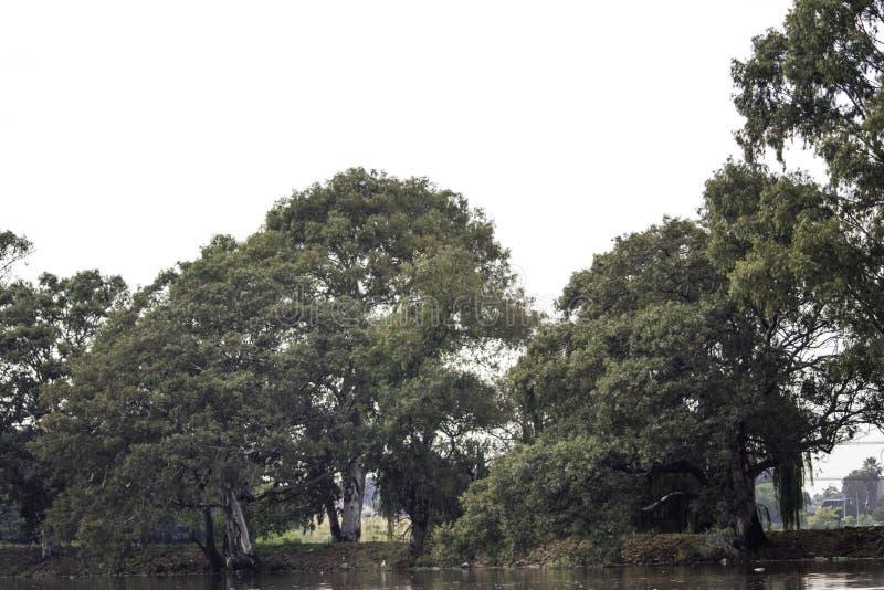 Träd på baksida av fördämningen royaltyfria bilder