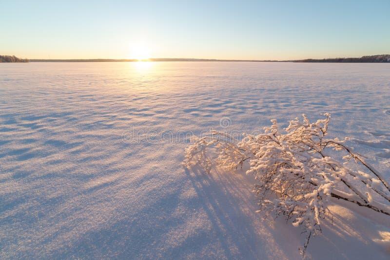 Träd på banken av den djupfrysta vintersjön. royaltyfri bild