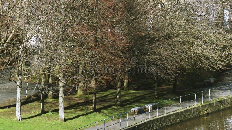 Träd på banken av flodvattnet av Leith från den stora föreningspunktbron - Edinburg, Skottland royaltyfri foto