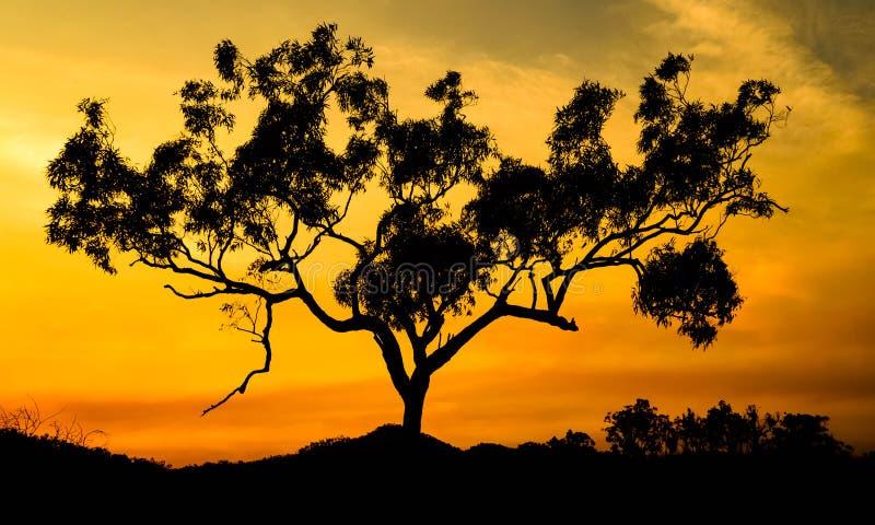 Träd på brand royaltyfri foto