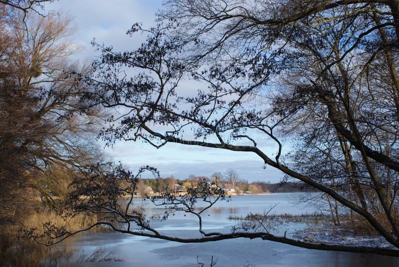 Träd på den blåa himlen, blått och brunt arkivfoton