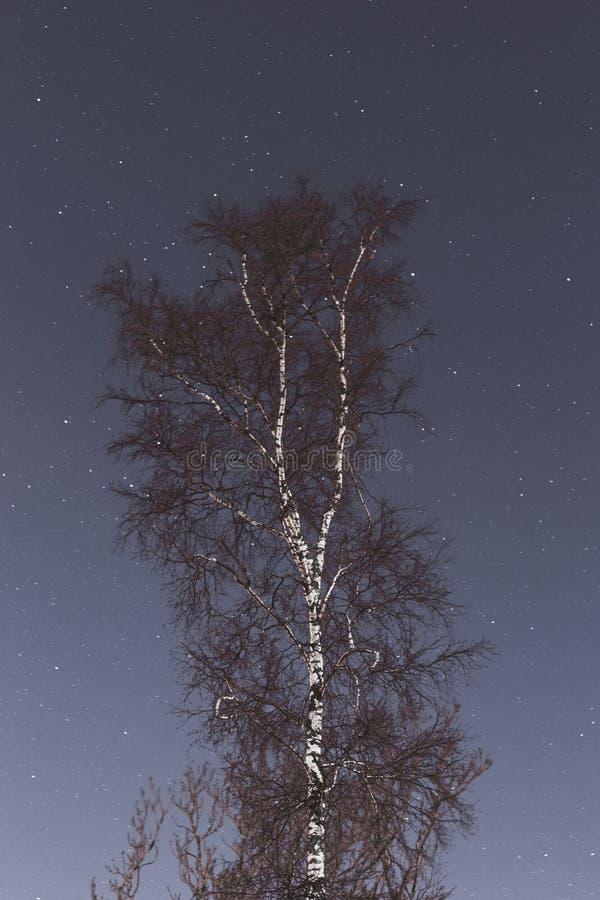 Träd på en backround för himmel för stjärnklar natt arkivfoto