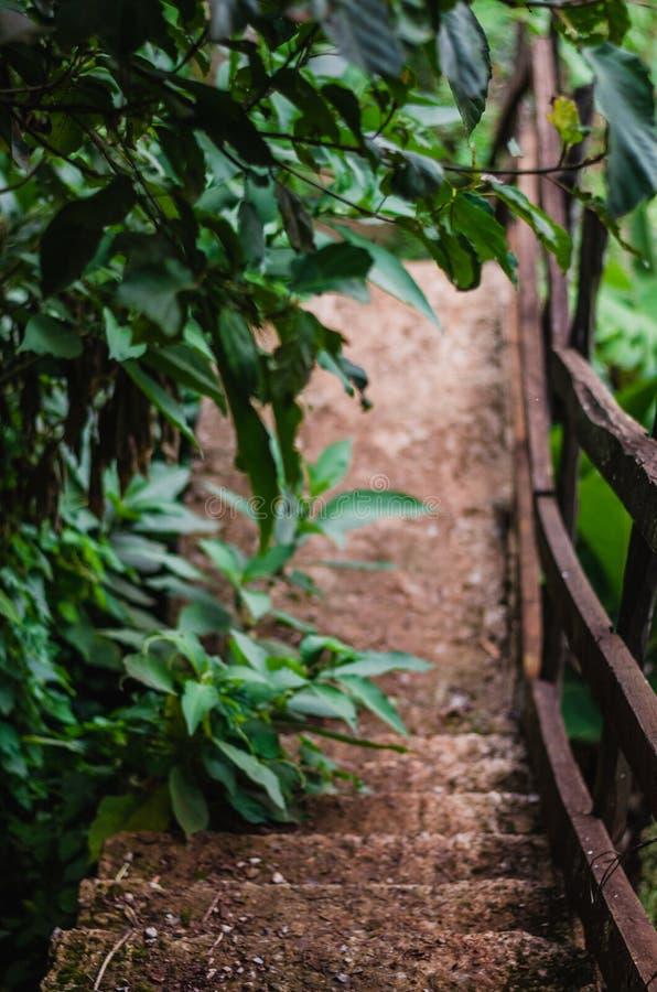 Träd på en bana ner en skog fotografering för bildbyråer