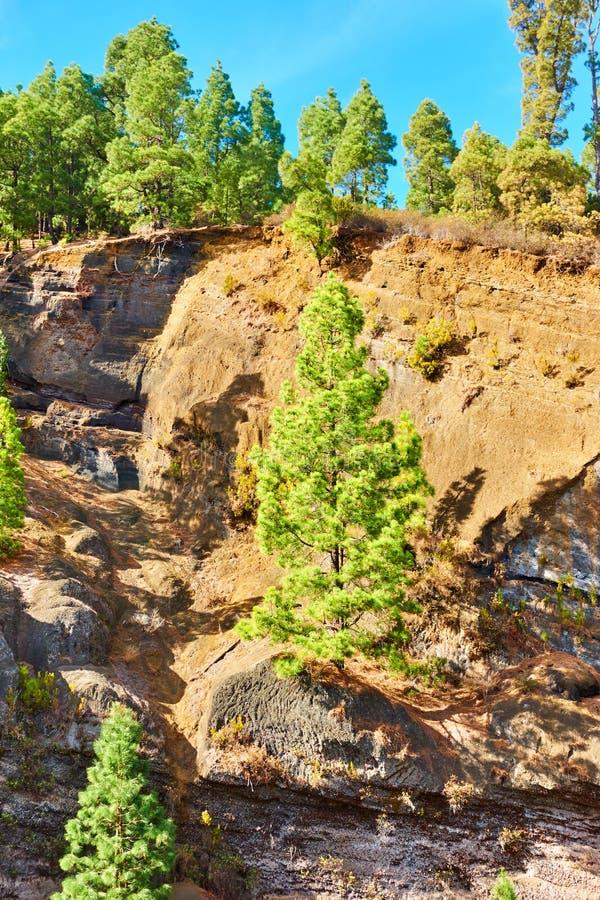 Träd på en bergssida royaltyfri fotografi