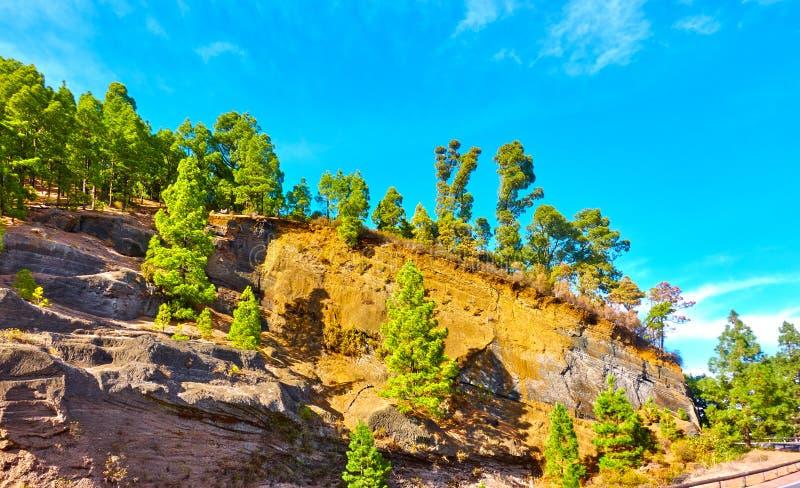 Träd på en bergssida royaltyfri foto