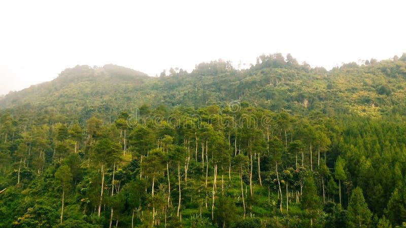 Träd på en bergssida arkivfoto