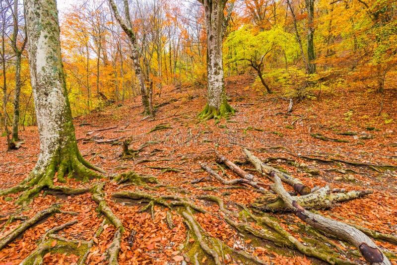 Träd på en bergssida, höstskog royaltyfria bilder