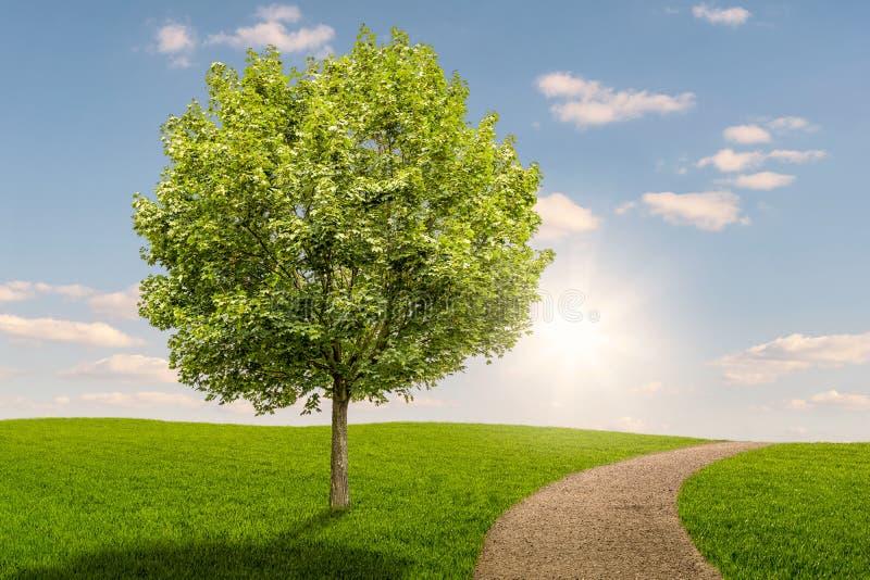 Träd på en grön äng med en bana på solnedgången arkivfoton