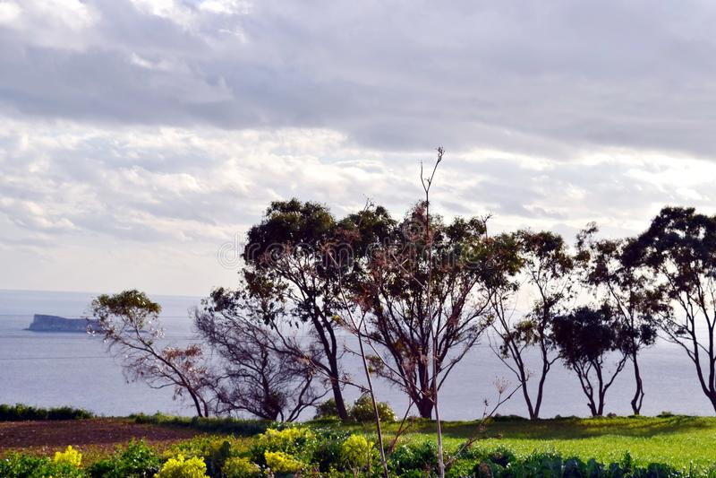 Träd på en klippa som förbiser havet och en liten ö royaltyfria bilder