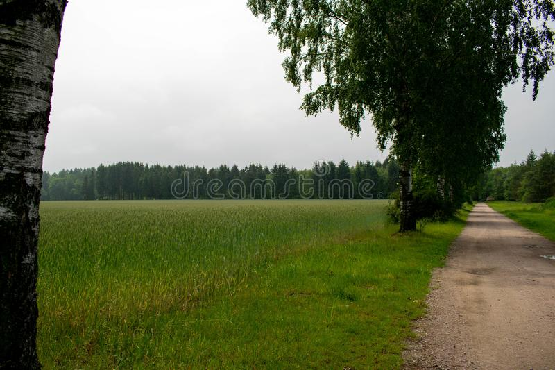 Träd på ett fält bredvid vägen royaltyfria bilder