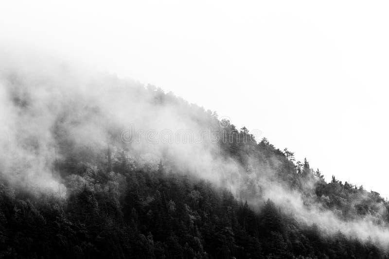 Träd på ett sidealmost dolt för berg vid dimma royaltyfria bilder