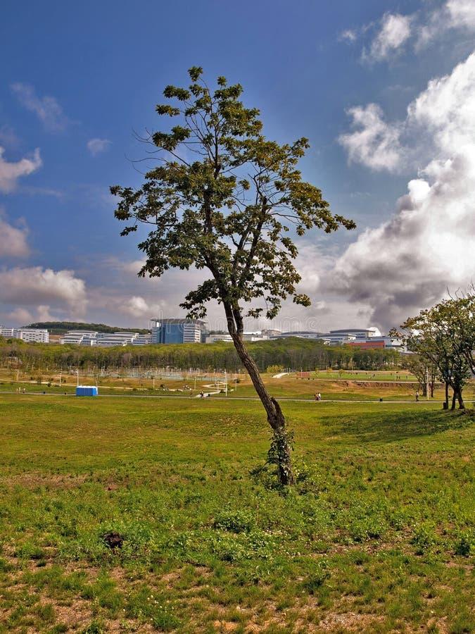 Träd på ett universitet för bakgrund FEFU arkivbilder