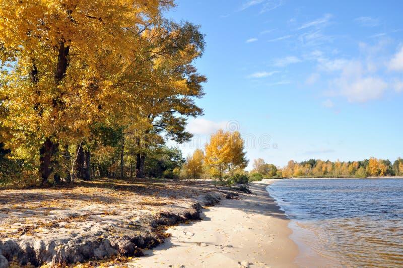 Träd på flodbanken, sjöar royaltyfri bild