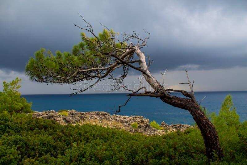 Träd på havkusten på den stormiga molniga dagen royaltyfri fotografi