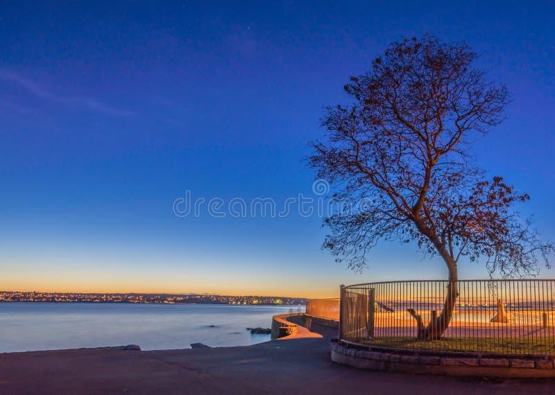 Träd på havsväggen royaltyfri bild